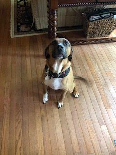 #houndtraining #DogTrainingLeesburg #DogsOfBarkBusters