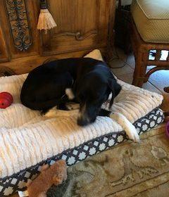 #rescuedogtraining #puppytraining #dogobedience #dogsofbarkbusters