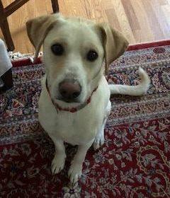 #labradortraining #lovelabs #DogTrainingMiddleburg #DogTrainingNearMe #DogsOfBarkBusters