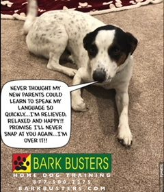 #BarkBustersNorthernVirginia #DogTrainingNearMe #DogTrainingLeesburg #FearAggression #DogsOfBarkBusters