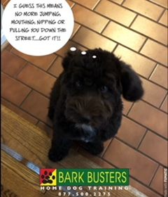 #BarkBustersNorthernVirginia #PuppyTrainingNearMe #PuppyTrainingOakton #SpeakDog #DogsOfBarkBusters #LabraDoodlePuppy