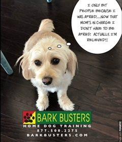 #cavapoo #cavapoodogtraining #DogTrainingAshburn #FearAggression #DogsOfBarkBusters #Cavachon