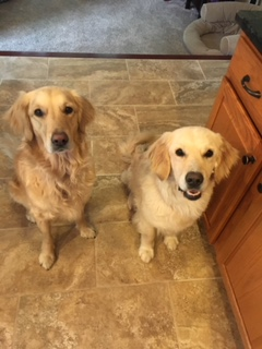 #BarkBustersNorfhernVirginia #DogTrainingNearMe #DogTrainingAshburn #DogsOfBarkBusters #GoldenRetriever