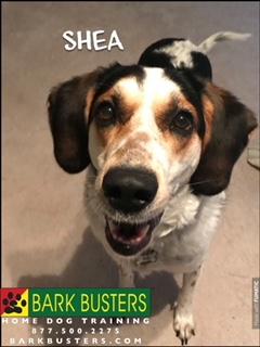 ##BarkBustersNorthernVirginia #SpeakDog #DogTrainingAshburn #DogTrainingNearMe #FearAggression #Barking #DogsOfBarkBusters