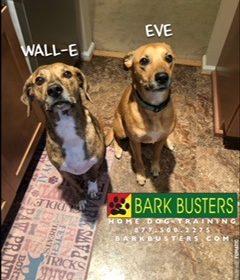#BarkBustersNorthernVirginia #DogTrainingNearMe #DogTrainingSterling #SpeakDog #SeparationAnxiety #DogsOfBarkBusters