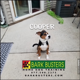 #PuppyTrainingNearMe #PuppyTrainingSterling #SpeakDog #DogsOfBarkBusters
