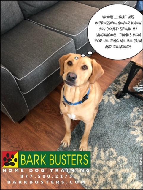 #BarkBustersNorthernVirginia #SpeakDog #DogTrainingNearMe #DogTrainingMiddleburg #DogsOfBarkBusters