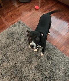 #puppytrainingnorthernvirginia #puppytrainermarkrenshaw
