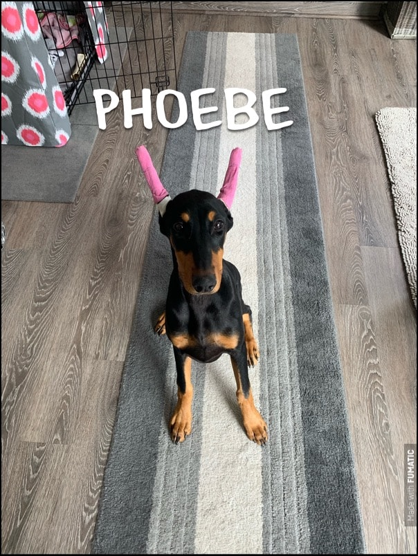 #dobermanpuppy #dogtrainingnearme