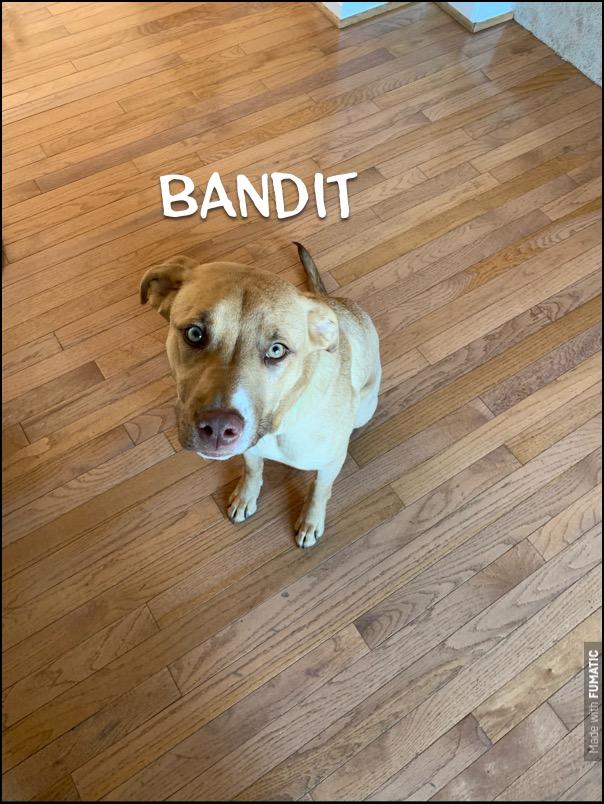 #dogtraininggreatfalls #labmix #dogsofbarkbusters
