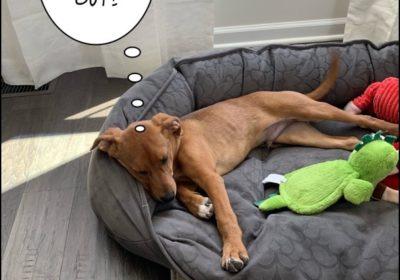 #houndmix #barkbustersnorthernvirginia