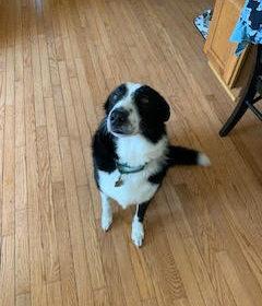 #rescuedog #dogtrainingnearme #dogtraining #dogtrainingfairfax