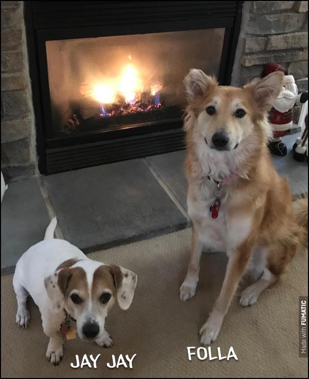 #beagle #egyptianstreetdog