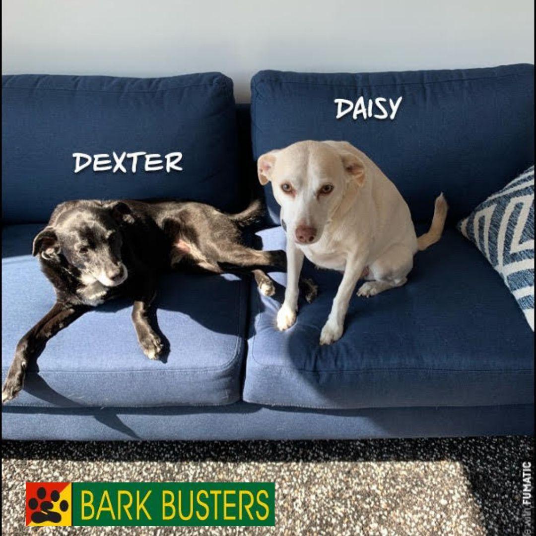 #bestdogtrainingfairfax