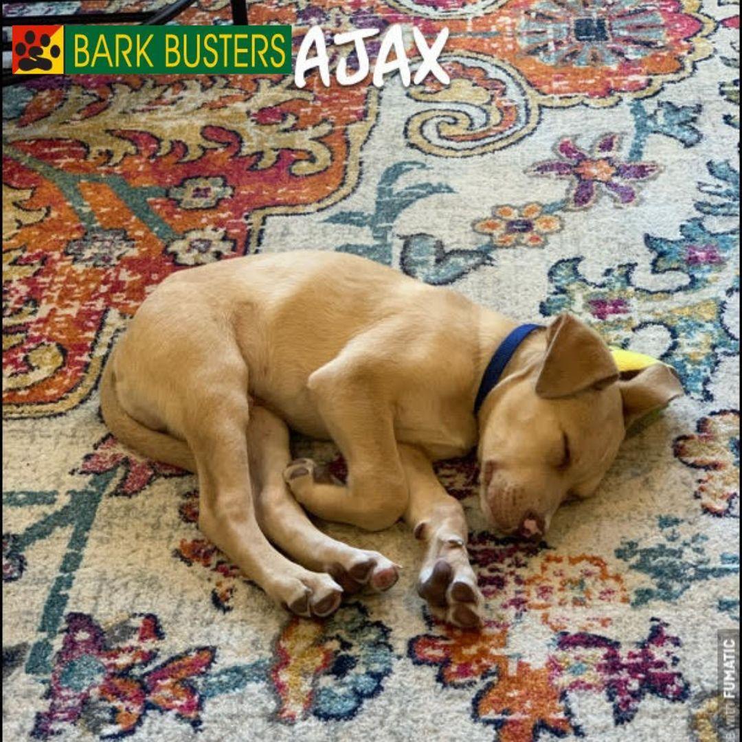 #puppybehavior