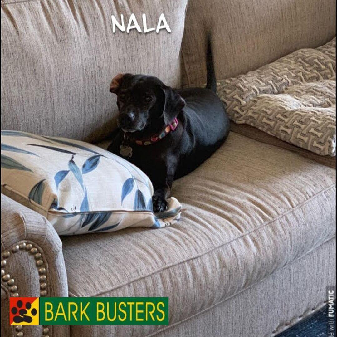 #barkbustersbeagletraining
