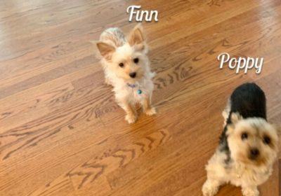 #puppytrainingnorthernvirginia