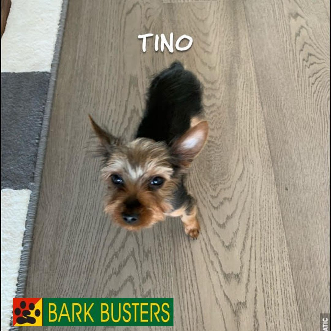 #ashburndogtraining