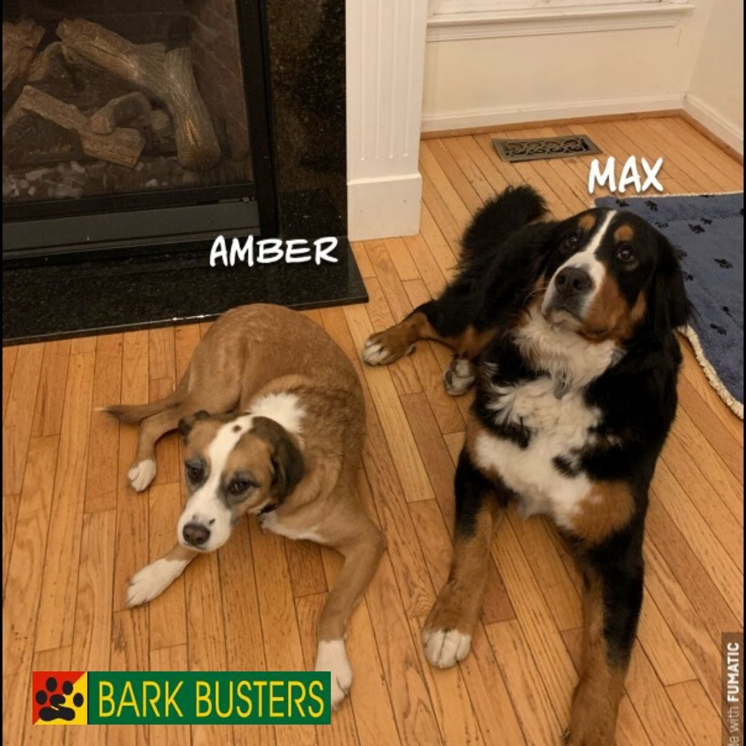 #barkbusterspuppytraining
