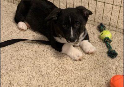 #puppytrainingashburnva