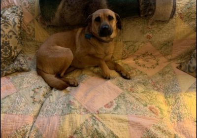 #sterlingdogtraining
