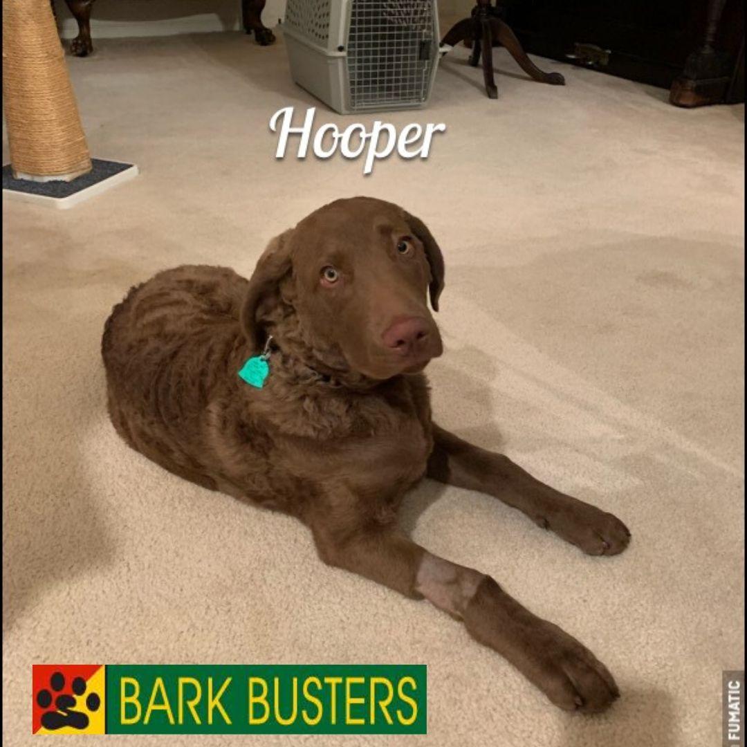 #dogtrainerashburn