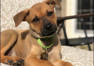 #ashburndogtrainig