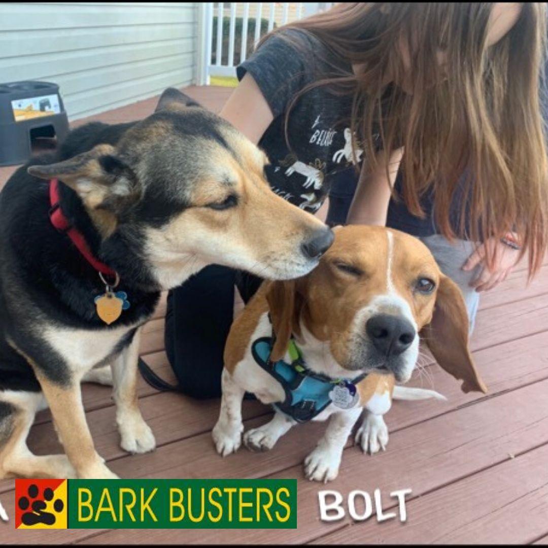 #bestashburndogtraining