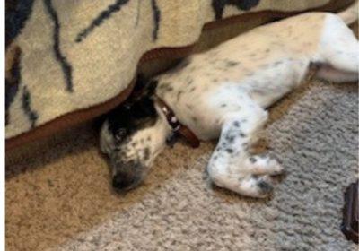 #Chantillydogtraining