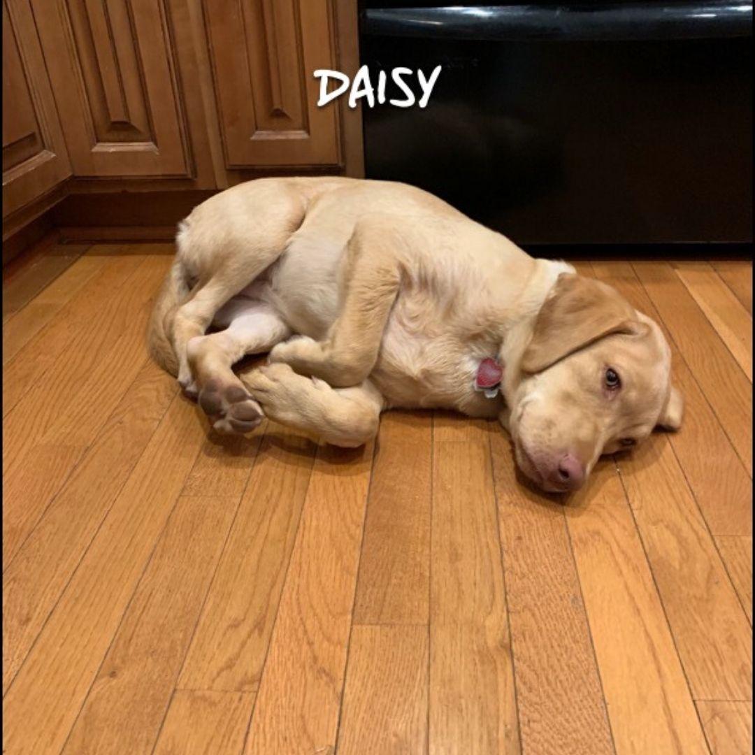 #puppytrainingherndon