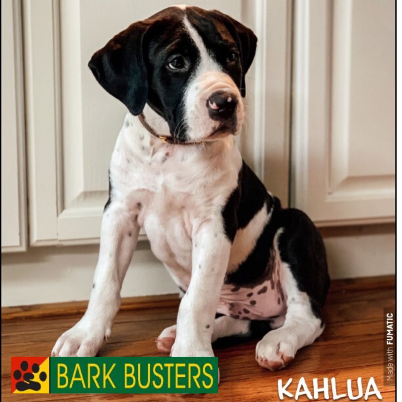 #puppytrainingfairfax
