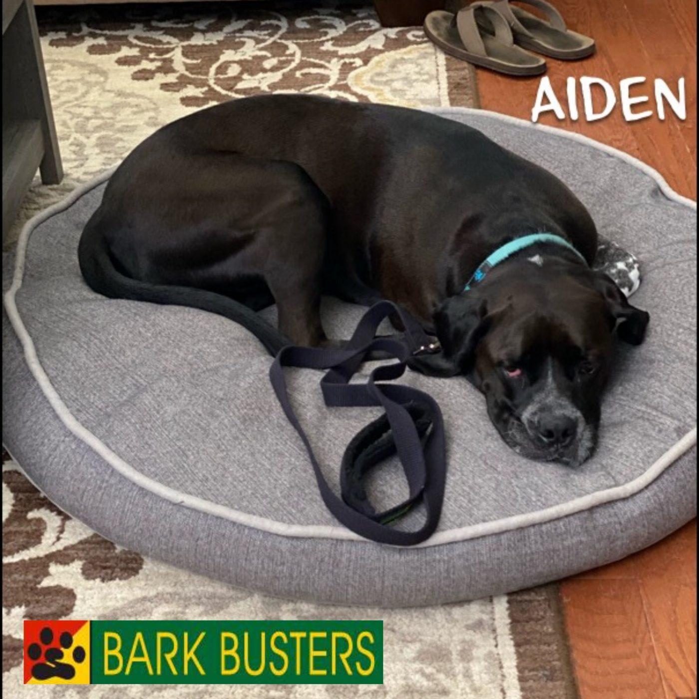 #ashburndogtrainer
