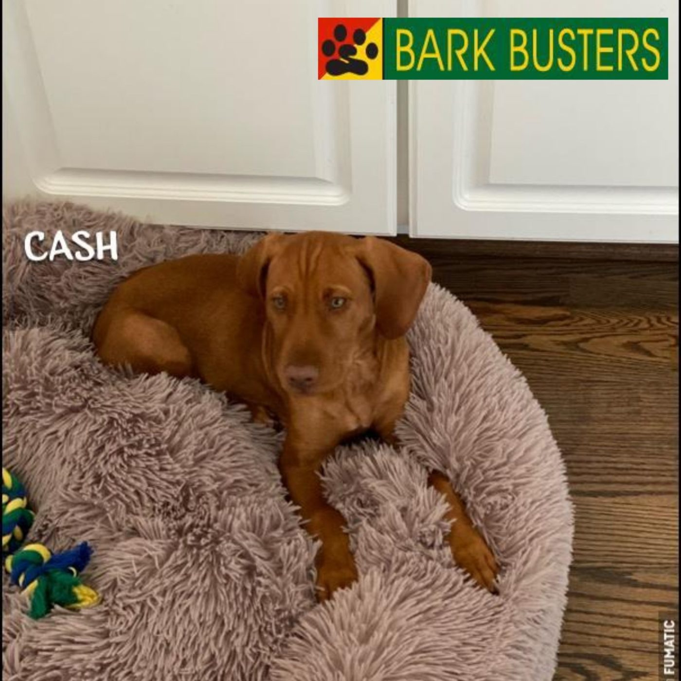 #puppytrainingashburn