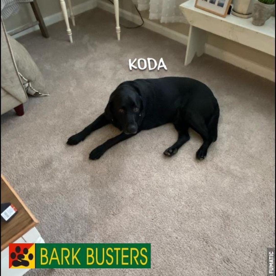 #bestdogtrainingashburn