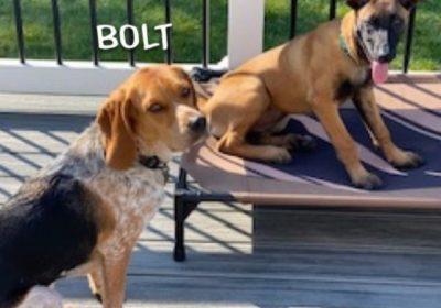 Ashburn Dog Training