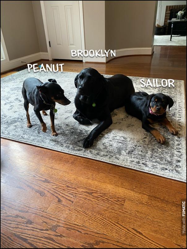 #multipledogtraining