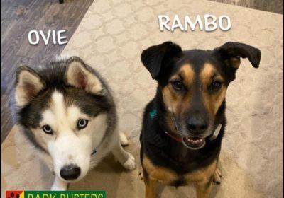 #huskydogtraining