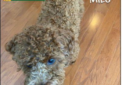 #Ashburn Dog Trainer