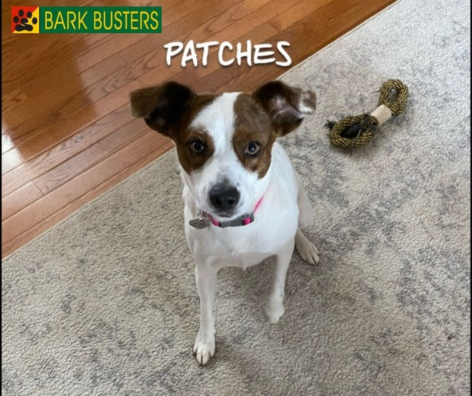 Aggression Dog Training - Bark Busters