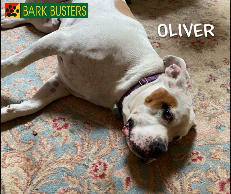 #sterling dog behaviorist